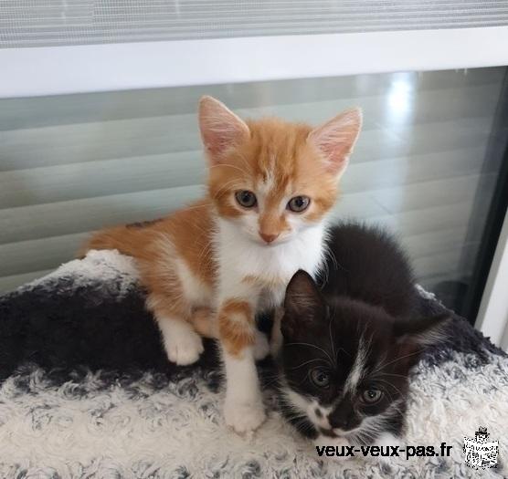 Donne chatons contre bons soins mâles et femelles