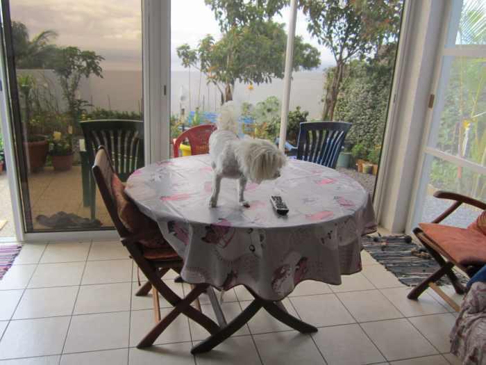 Très belle table ronde avec glace + 5 chaises fauteuils