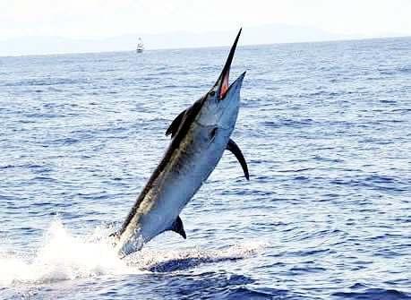 Pêche aux gros a l'ile maurice